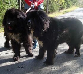 Carlo und Charlie 004-1